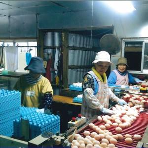(株)大薗養鶏場