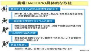 HACCP-K6